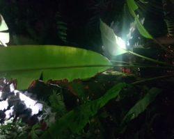 Noční prohlídka skleníku Fata Morgana